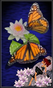 Butterfly Graphics By Sandra D